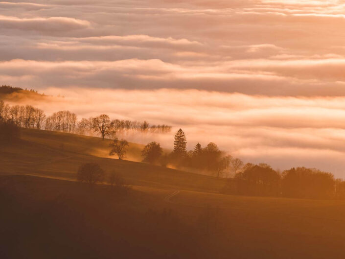 Sunset in the Rhoen mountains of Germany while a sea of fog is emerging.
