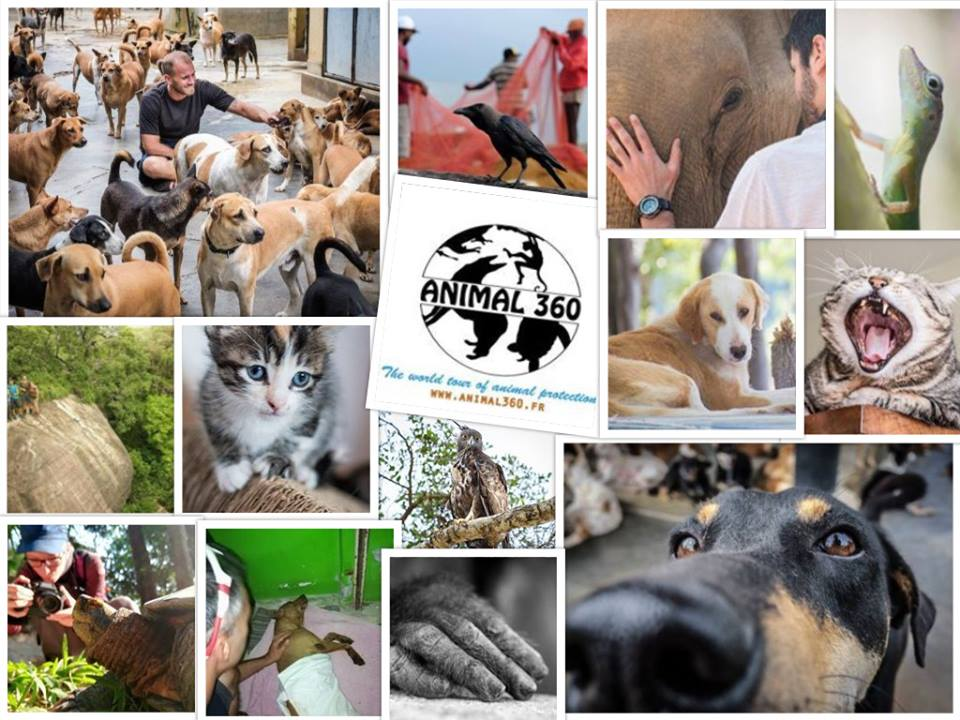 The image shows a collage of different animal conservation projects with the logo of Animal360 in the middle.