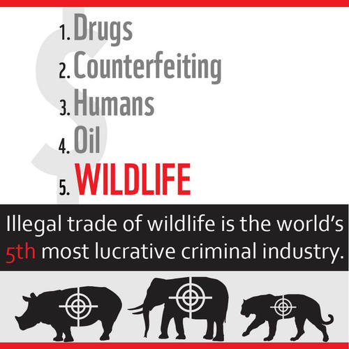 The picture is a anti wildlife crime campaign poster which lists the 5 most luctraive criminal indistries in the world. Wildlife crime is number 5, right after drugs, counterfeiting, humans and oil.