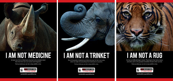 The picture shows an anti wildlife crime compain poster with a rhino, an elephant and a tiger.