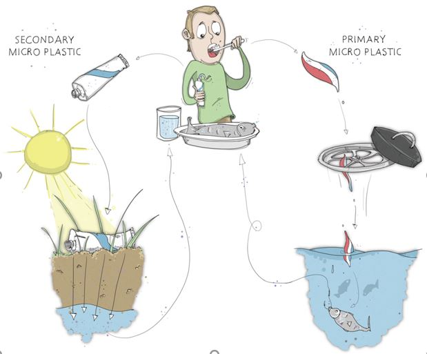 The figure shows the cycle of microplastic. First we humans throw plastic away which is then reduced in the ocean. Fish and other marine organisms take in the microplastic and afterwards humans take it in again through for example drinking water or food (fish).