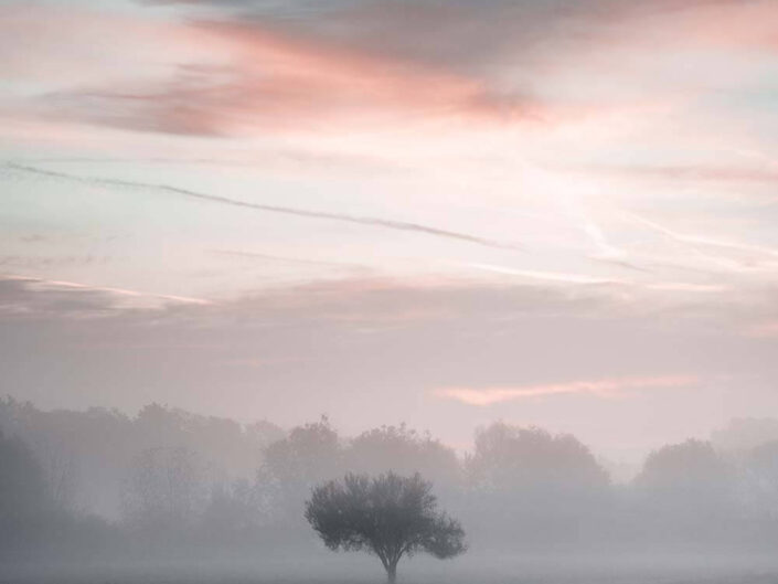 A lonely tree covered in fog in rural Hungary.