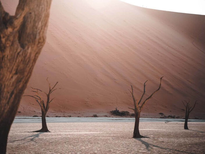 Deadvlei dead trees in Namibia.