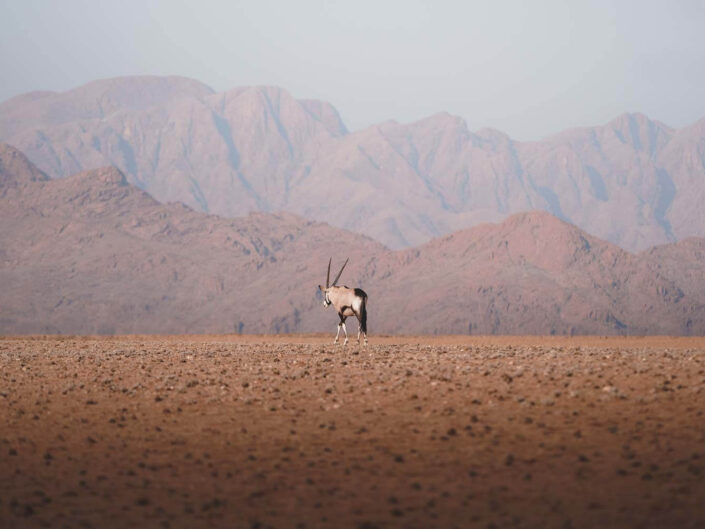 Lonely oryx facing mountains