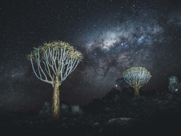 Milky way above the quivertree forest in Namibia.